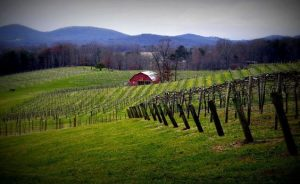Winery in Dahlonega