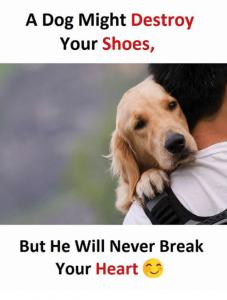 funny meme about heart break